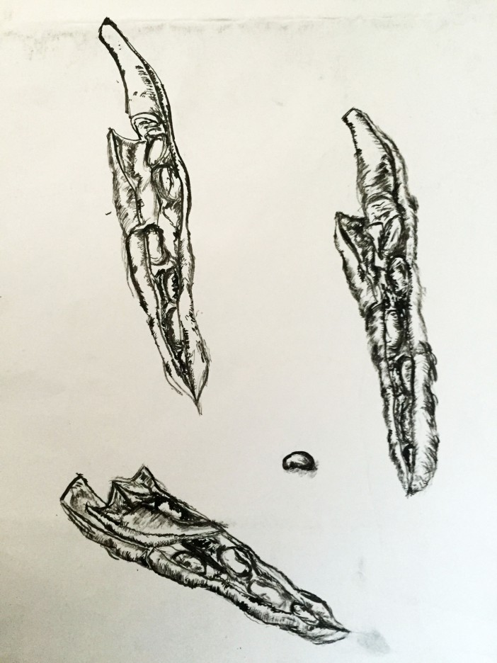 Bean Varaint Sketch